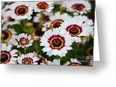 The White Field Greeting Card