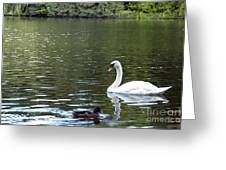 The White Swan Greeting Card