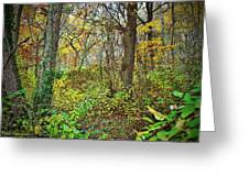 The Woods In Autumn Greeting Card