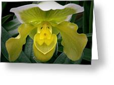 The Yellow Orchid Greeting Card
