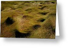 Thick Grasses Blow In The Wind And Form Greeting Card