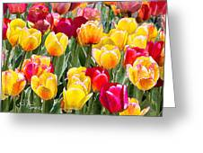 Think Spring Greeting Card by Suni Roveto