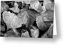 Thirsty Leaves Black And White Greeting Card