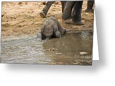 Thirsty Young Elephant Greeting Card