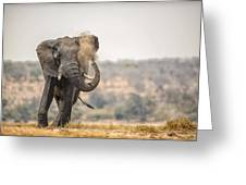 This Is Botswana No.  8 - Feels So Good Greeting Card
