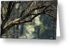 This Is Our World No. 9 - Lets Branch Out Greeting Card