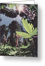 This Shot Is An Enlargement Of 55f13 Greeting Card