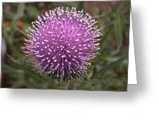 Thistle 1 Greeting Card