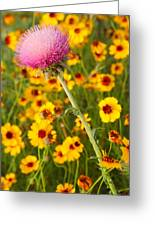 Thistle And Coreopsis 2am-110455 Greeting Card
