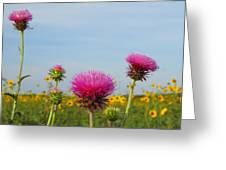 Thistle And Sunflower 2am-110468 Greeting Card
