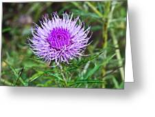 Thistle Dew 1 Greeting Card