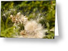 Thistle Down Greeting Card
