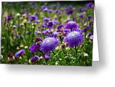 Thistle Field Greeting Card
