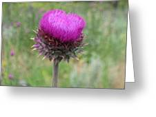 Thistle Heart Greeting Card