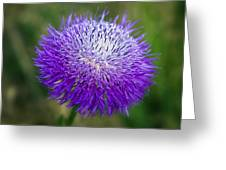 Thistle I Greeting Card