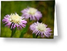 Thistle Illusion Greeting Card