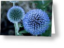 Thistle In Bloom Greeting Card