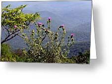 Thistle On The Mountain Greeting Card