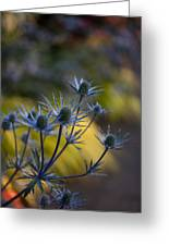 Thistles Abstract Greeting Card