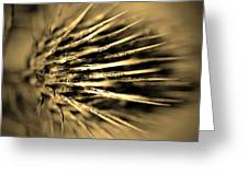 Thorny In Sepia Greeting Card