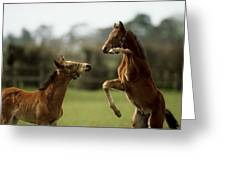 Thoroughbred Foals Playing Greeting Card