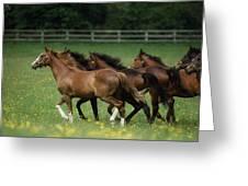 Thoroughbred Horses, Ireland Greeting Card