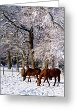 Thoroughbred Horses, Mares In Snow Greeting Card