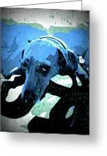 Those Puppy Dog Eyes Greeting Card
