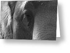 Thoughts Of The Elephant Greeting Card