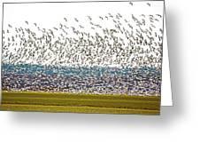 Thousands Greeting Card