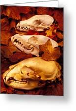 Three Animal Skulls Greeting Card