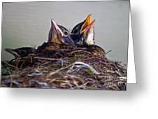 Three Baby Robins Greeting Card