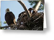 Three Bald Eagles In The Nest Greeting Card by Mitch Spillane