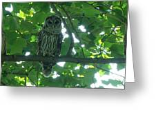 Three Barred Owls Greeting Card
