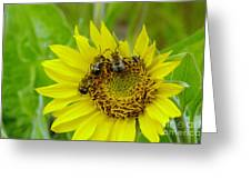 Three Bees Hunkering Down Greeting Card