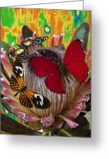 Three Butterflies On Protea Greeting Card