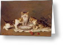 Three Cats - Red Cherries And Bees Greeting Card