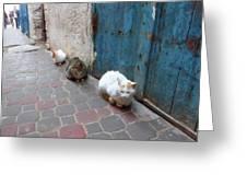 Three Cats In Essaouira Greeting Card