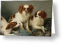 Three Cavalier King Charles Spaniels On A Rug Greeting Card