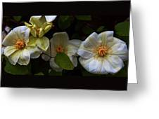 Three Clematis More Greeting Card