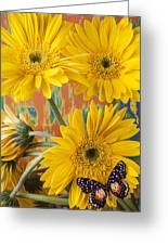 Three Daisy's And Butterfly Greeting Card