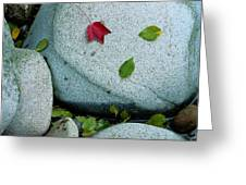 Three Fallen Leaves Lie On A Rock Greeting Card
