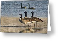 Three Geese Greeting Card