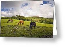 Three Horses Grazing In Field Greeting Card
