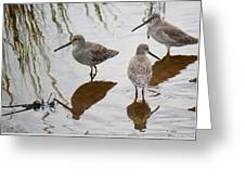 Three Long Billed Dowitchers Greeting Card