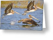 Three Pelicans Taking Off Greeting Card