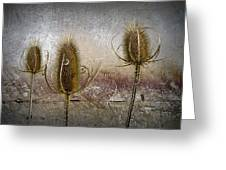 Three Prickly Teasels Greeting Card