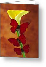 Three Red Butterflies On Calla Lily Greeting Card