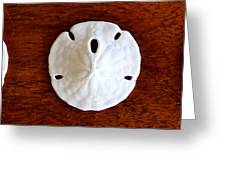 Three Sand Dollars Greeting Card