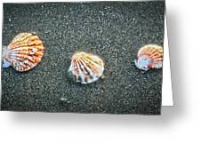Three Sea Shells Greeting Card